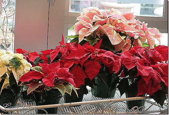 PoinsettiaCart_Dec2
