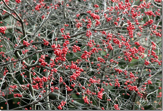 Berries3_Dec2