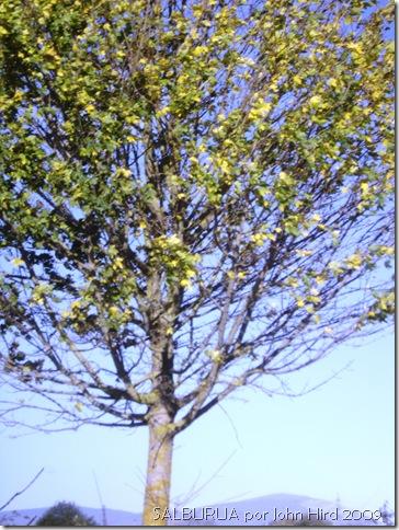 Salburua Nov 2009 013