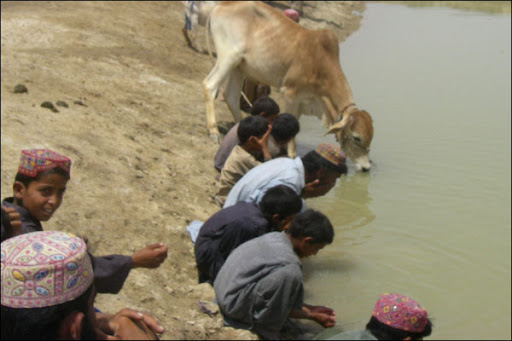Humans and animals drinking from the same pond of (dirty rain) water !