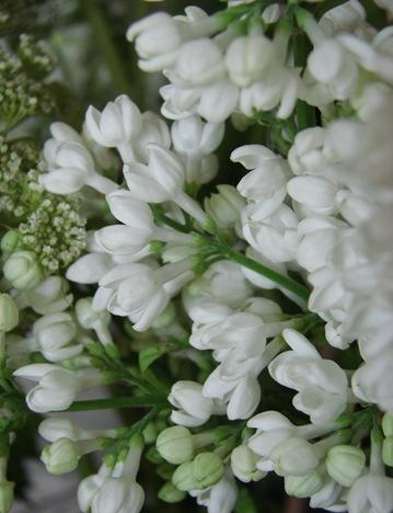 bloemen tot 2011 (40)