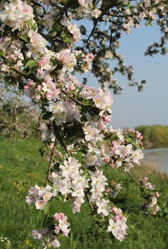 bloesem 2011 039