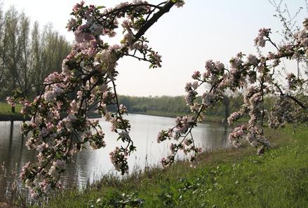 bloesem 2011 046