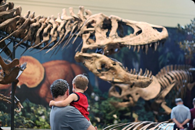 natural history museum trexdadmiles
