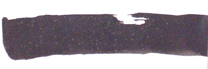 CIMG8559