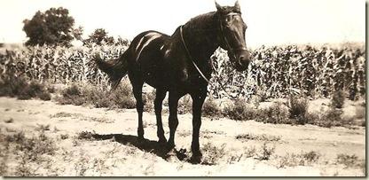 Queen in 1937-2