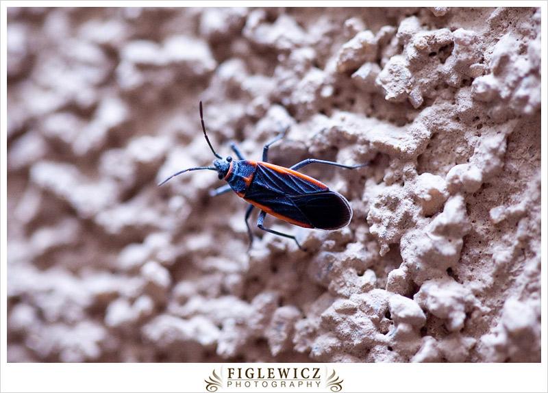 FiglewiczPhotography-AZ-0025.jpg