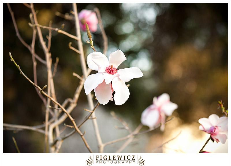 FiglewiczPhotography-HuntingtonLibrary-0039.jpg