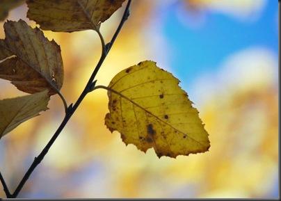 leaf1x