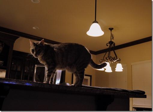 sallycat