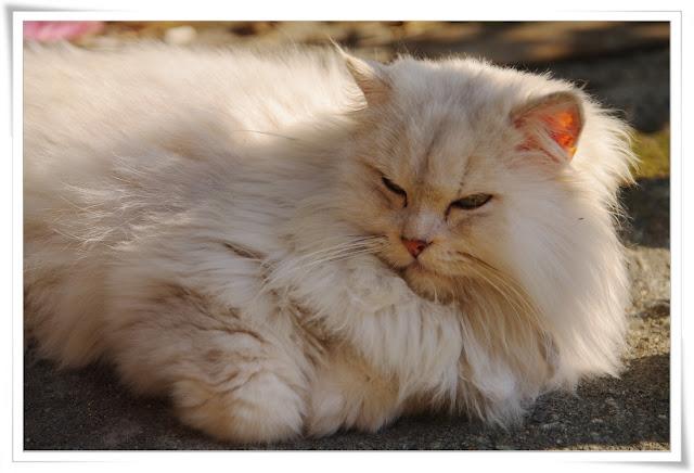 寒冬。陽光。猴硐貓