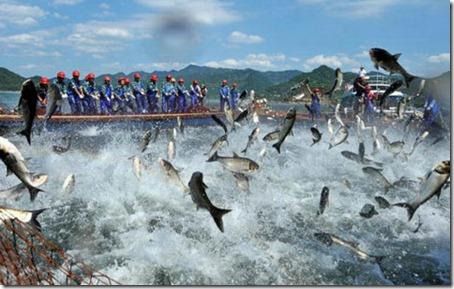 Flying Fish - Amaze Pics (3)