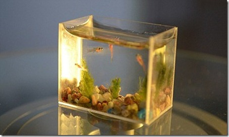 The World's Smallest Aquarium Tank 3