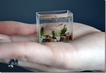 The World's Smallest Aquarium Tank 2