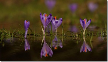 Amazing_Purple_Flowers_10