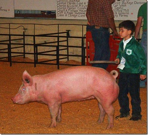 Fair Hog Show 033