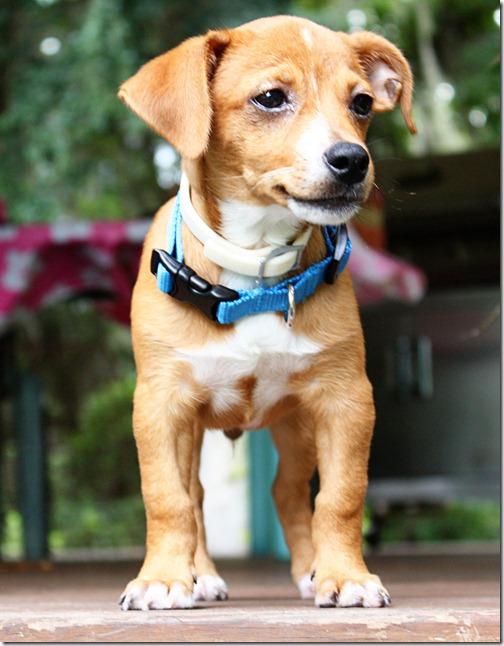 ebay puppy 028