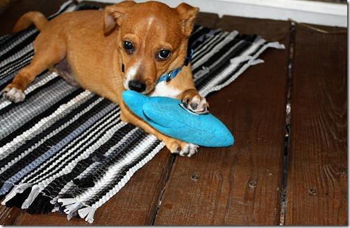 ebay puppy 041