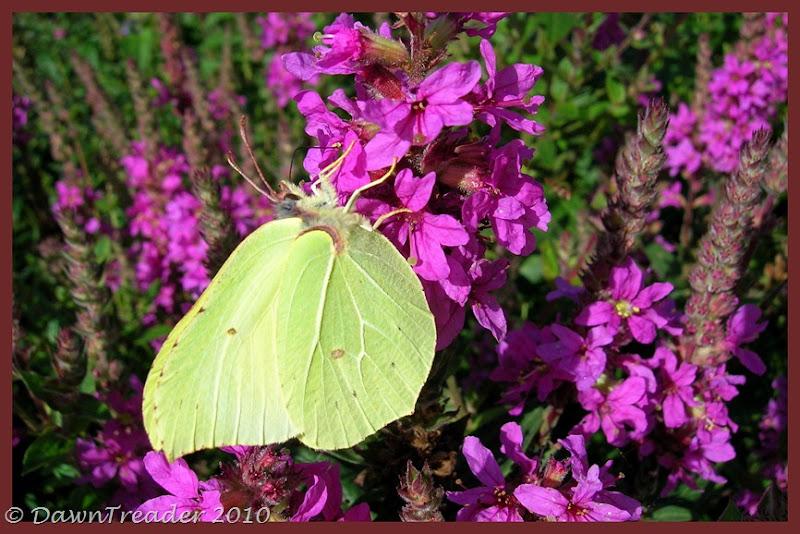 2010-08-20 butterfly2