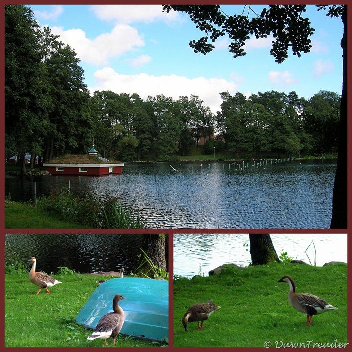 2010 08 01 Ramnasjön, birds, park4