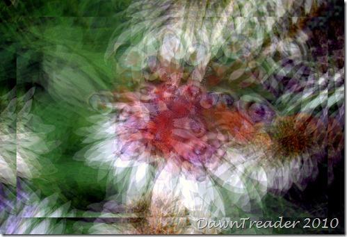 2010-08-21 butterfly art 2