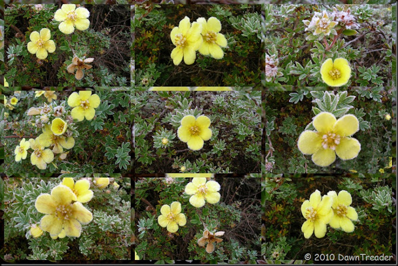 2010-10-13 Frosty Yellow