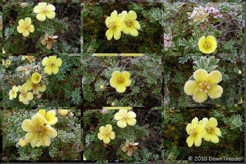 2010-10-13 Frosty Yellow