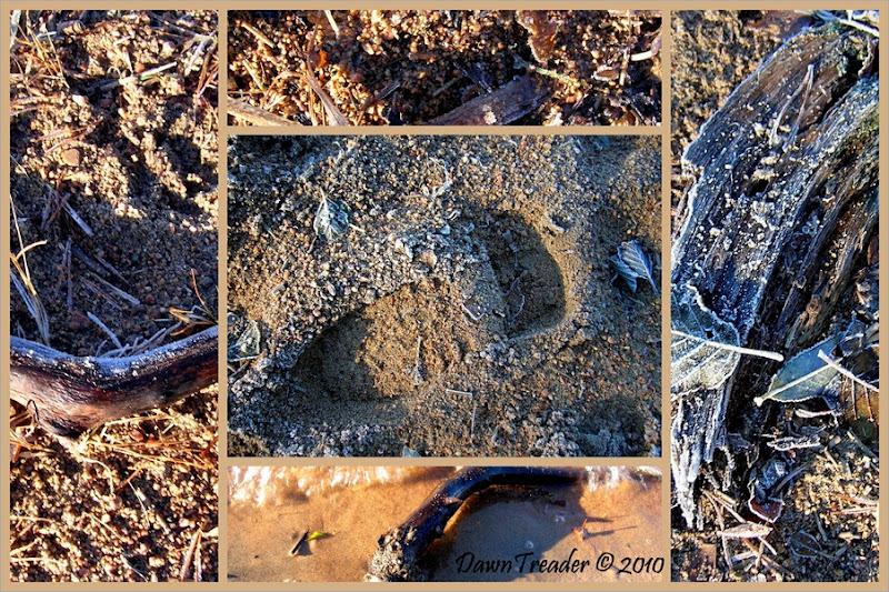 2010-11-07- frosty beach 2