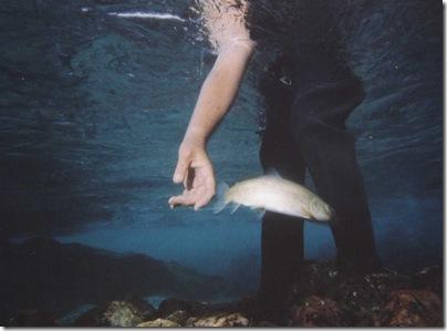 postv voda