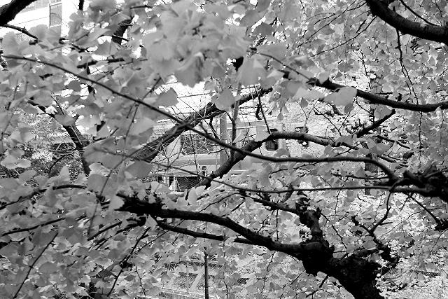 Shinjuku Mad - Plain ground 11