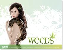 weeds_mlp_1024x768