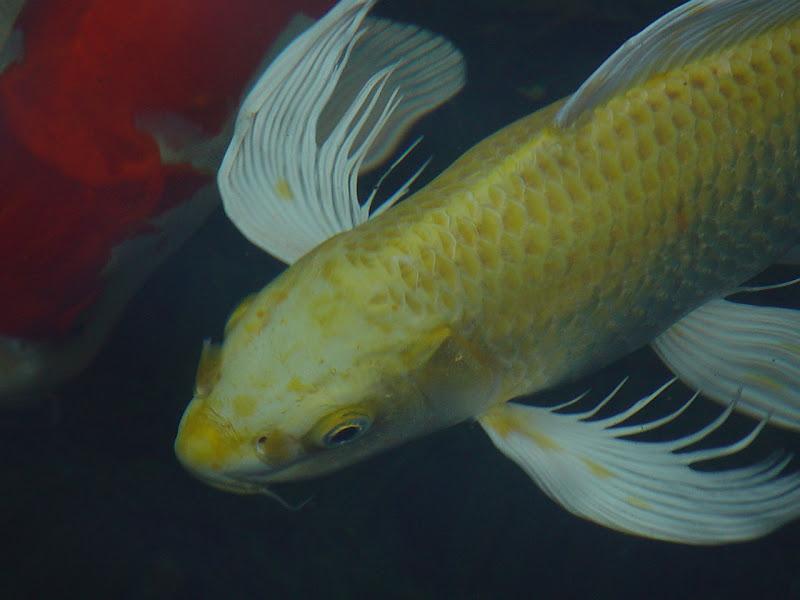 Fish in my water bucket? DSC01556