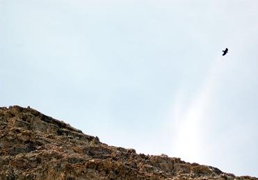 Death Valley - Life!!