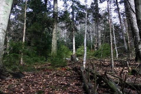 Samoobnova lesa.