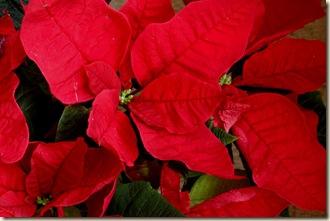 Christmas 054