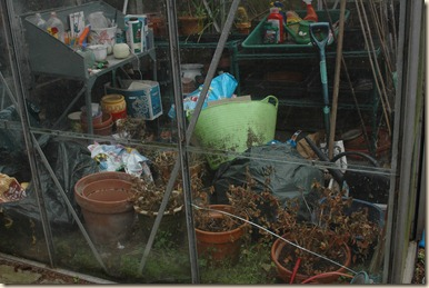 garden a day 001