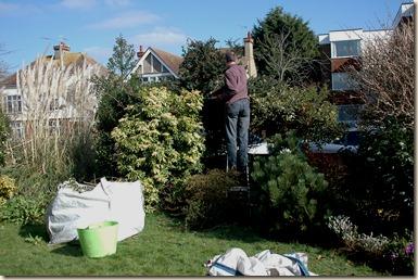 garden a day 030