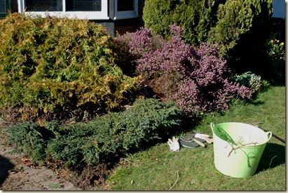 garden a day 041