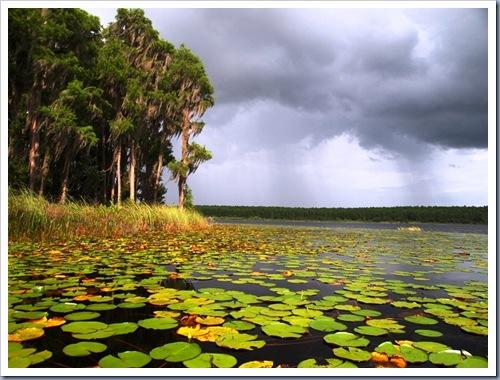 Lake Louisa State Park2