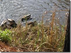 Ducks KOA 2011 (12)