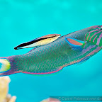Exotic Fish Photography on the Cheap