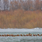 Winter-2010-Danube-Delta_by_Daniel_Petrescu