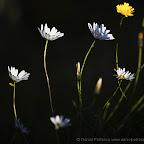 Flowers by Daniel Petrescu