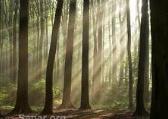 Icfes Mejor Saber Componente Flexible Interdisciplinar Medio Ambiente