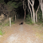 Das Opossum hat uns in der Nacht mehrmals besucht...