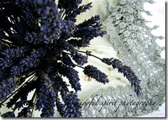 lavender and lace5x7 watermark