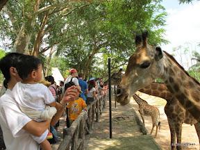 พู่กันเที่ยวบางแสนวันที่ 3 สวนสัตว์เปิดเขาเขียว