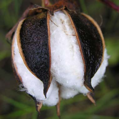 Textile exporters demand ban on cotton waste exports