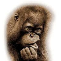 Macacos C (32).jpg