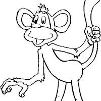 Macacos PB (12).jpg